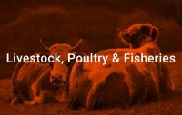 livestock-or